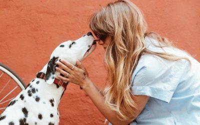 Tierbetreuung – Das musst du als Tierbesitzer wissen