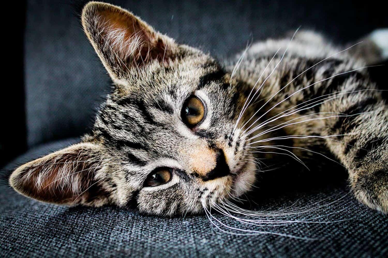 Tibeo Tierbetreuung Katze