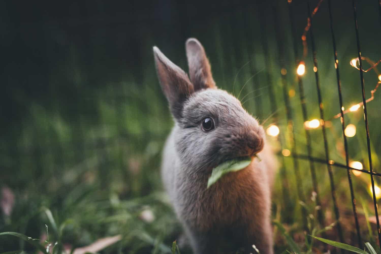Tibeo Tierbetreuung Kleintiere