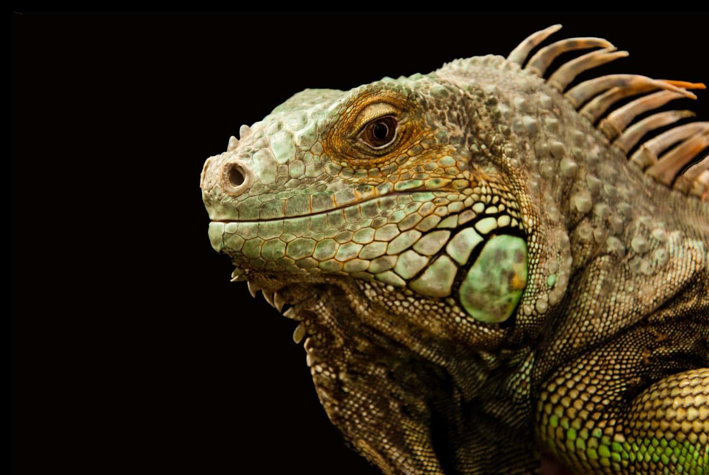 Tibeo Tierbetreuung Reptilien