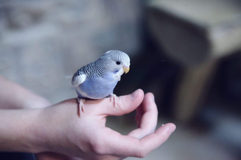 Tibeo Tierbetreuung Vögel