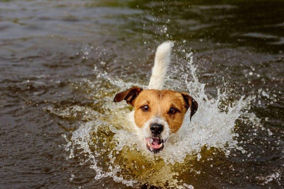 Baden mit Hund in München – die besten Badestellen für Hunde