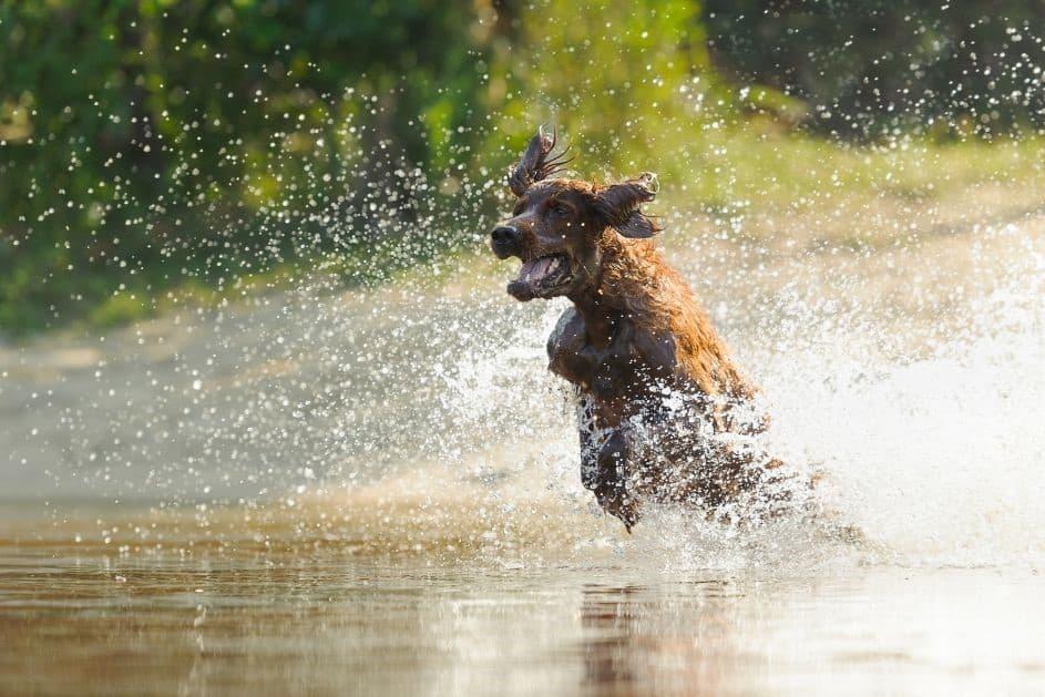 See Für Hunde