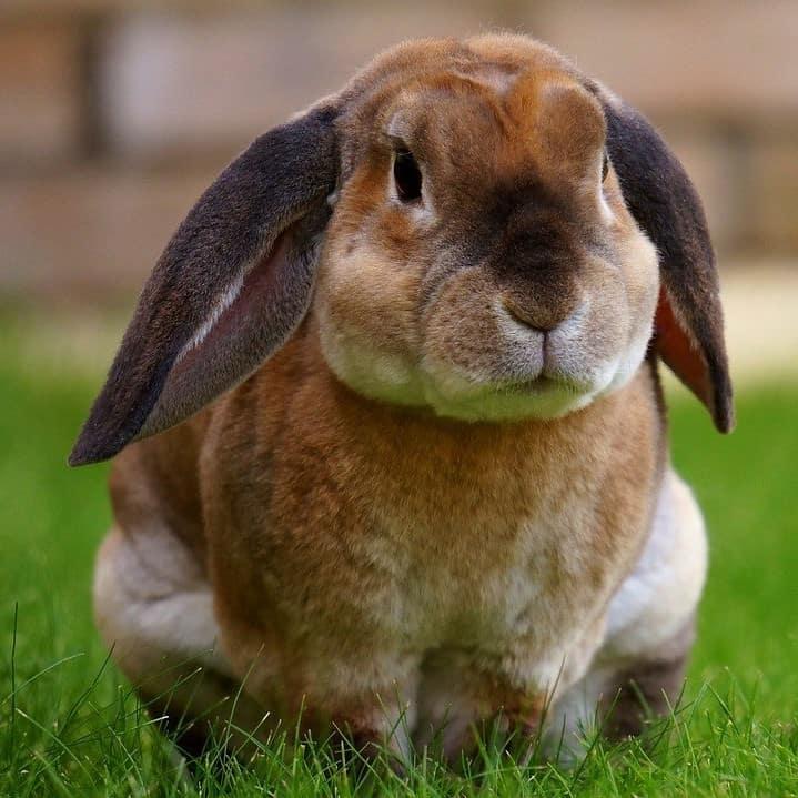 Kaninchen sommerhaarschnitt 1