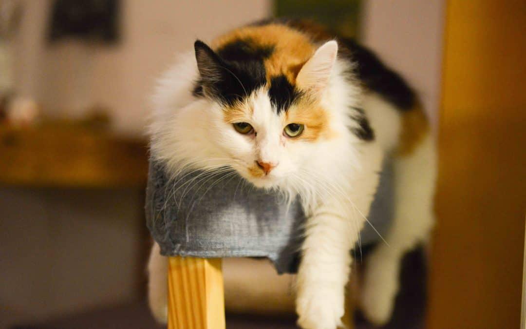 Katze bei Hitze – so einfach hilfst du deiner Katze