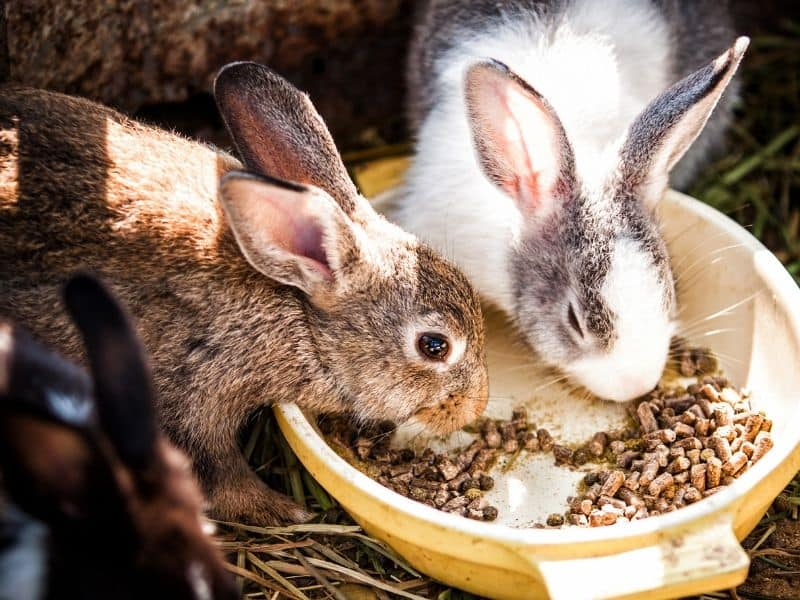 kaninchen fütterung hitze