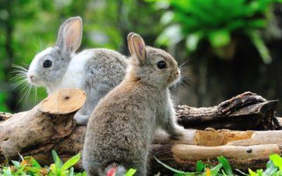 Wie du Kaninchen vor Hitze schützt & warum Abkühlung im Sommer so wichtig ist