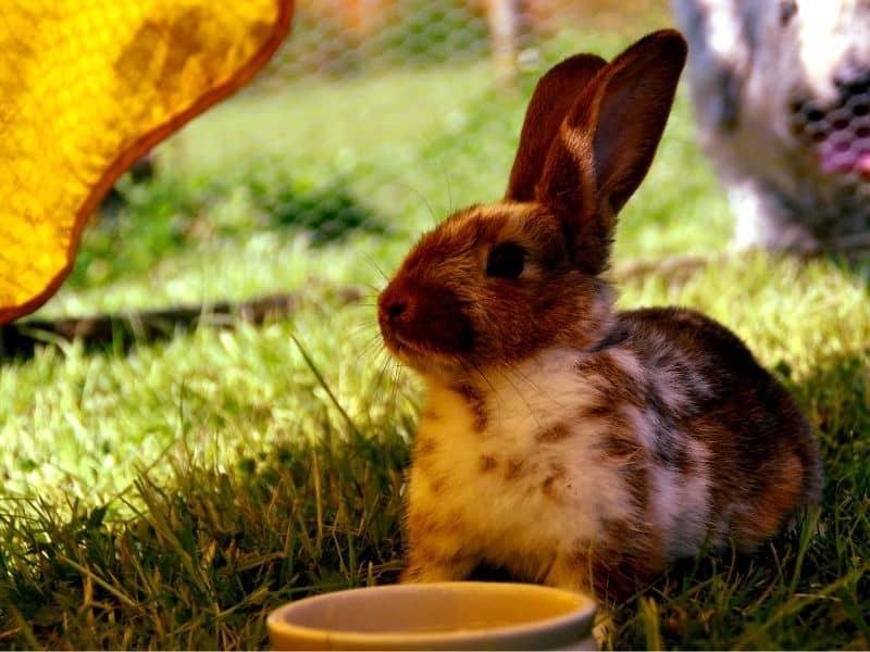 kaninchen hitze schatten