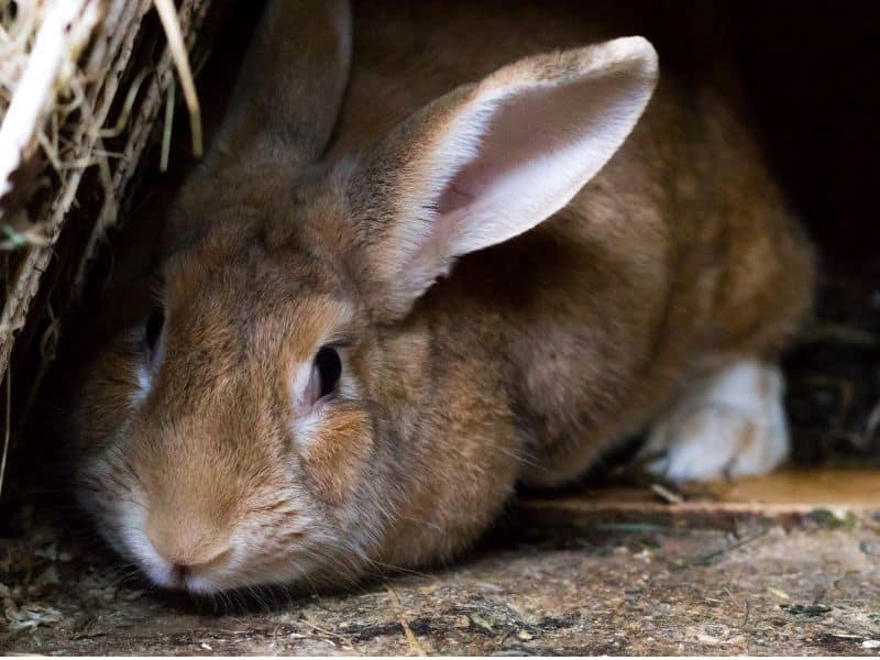 kaninchen hitzeschlag