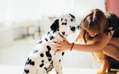 Zecken bei Hund, Katze & co. – Zecken vorbeugen & richtig entfernen