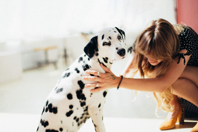 Zecken Bei Hund Katze Co Zecken Vorbeugen Richtig Entfernen
