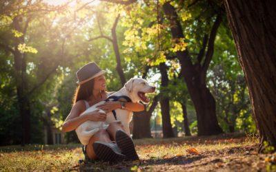 Tiersitter Job – Welche Anforderungen musst du als Tiersitter erfüllen?