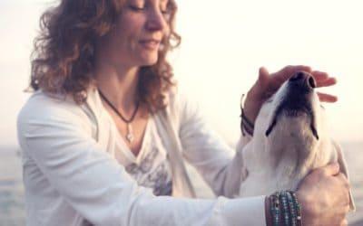 Hund beruhigen – 10 Beruhigungstipps bei der Hundebetreuung
