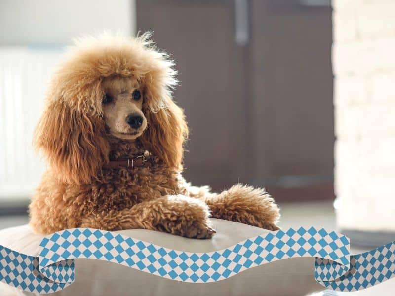 Mit Hund entspannt durch die Wiesn-Zeit – Ängstliche Hunde beruhigen
