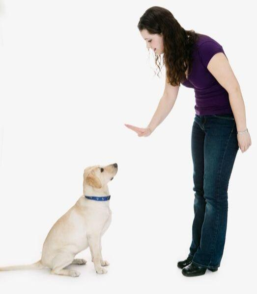 Hunde beschäftigen drinnen distanz körpersprache