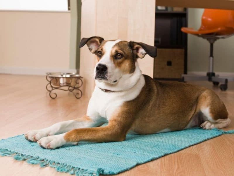 Hunde beschäftigen drinnen signale geben