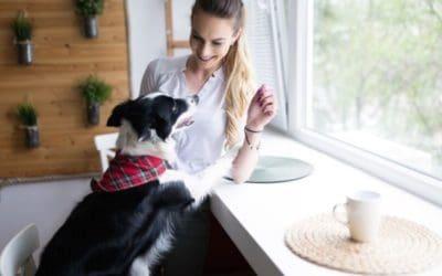7 Ideen Hunde drinnen zu beschäftigen – einfache, aber herausfordernde Kopfarbeit