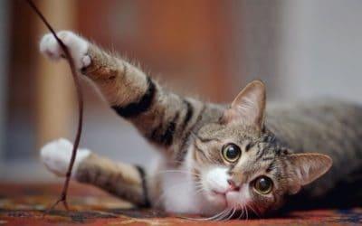 In 5 Schritten zu einem sicheren Zuhause für Hund & Katze