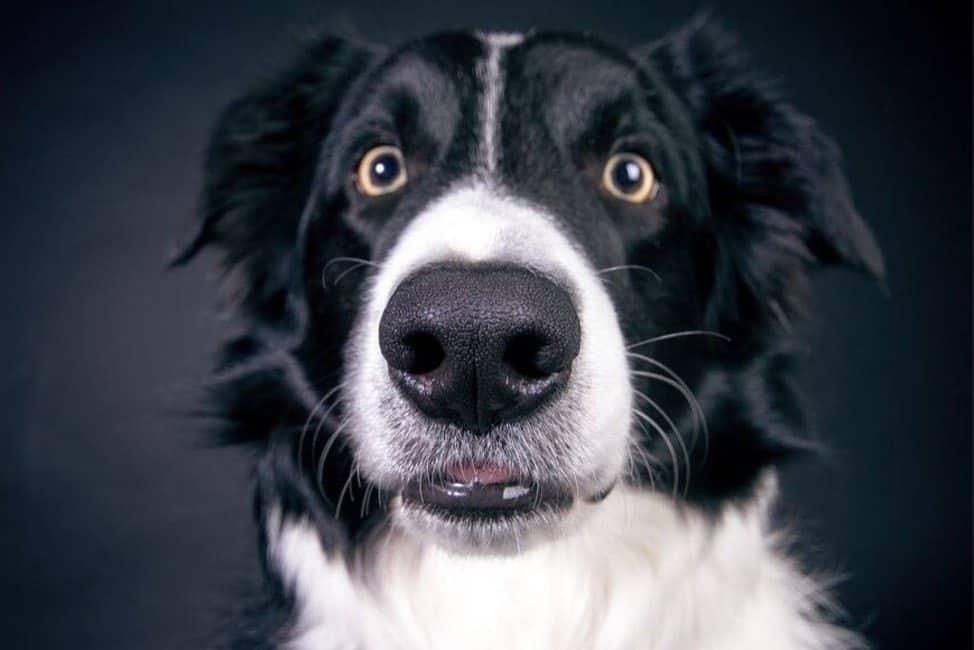 12 verblüffende Fakten über Hunde, die du noch nicht wusstest