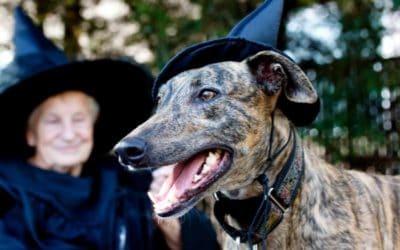 Hundeween – Ist dein Vierbeiner vor den Geistern sicher?