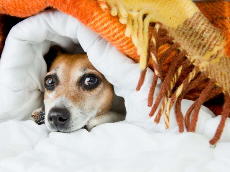 Halloween Hunde ruhiger Raum Tibeo Tierbetreuung