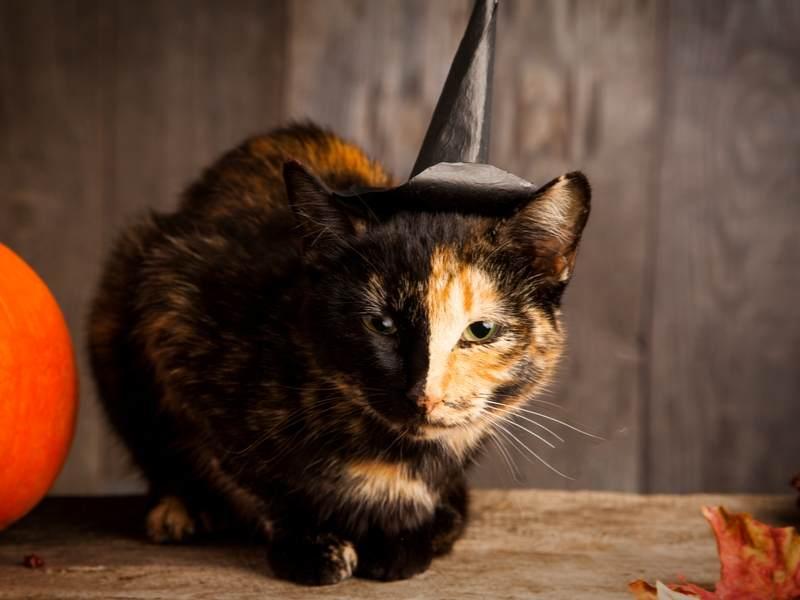 Halloween Katzen zu Hause Tibeo Tierbetreuung