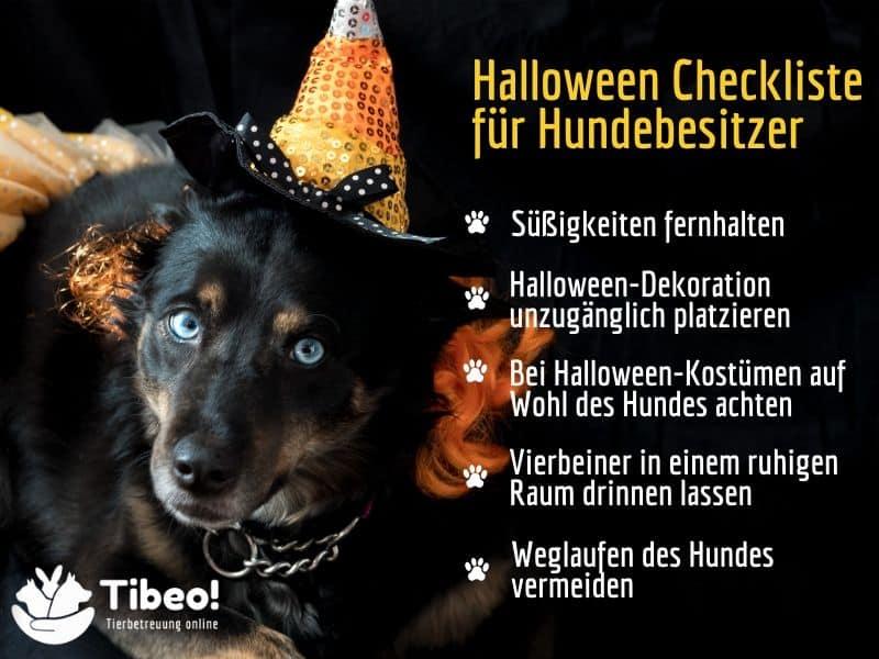 Halloween mit Hund Tibeo GMB