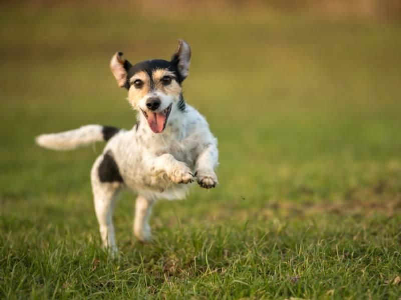 Die 11 schönsten Hundespielplätze & Hundeauslaufgebiete in Berlin
