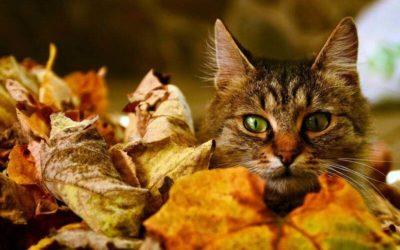 Katzen im Herbst richtig pflegen & beschäftigen