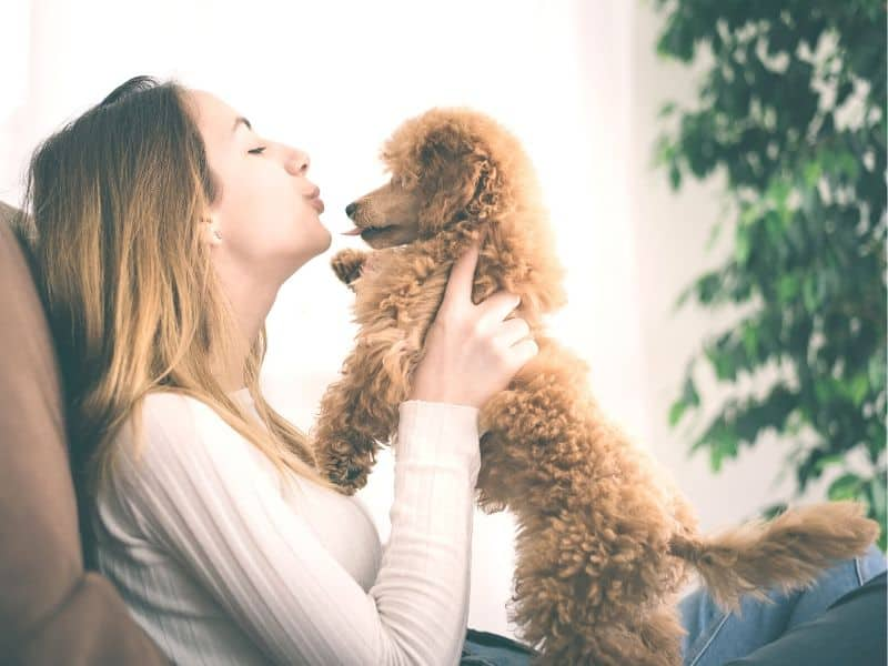 Gastfamilie – Hund, Katze & co. zuhause betreuen
