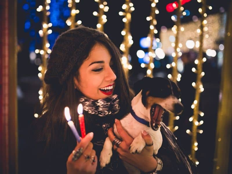 6 Gefahren für deine Fellnase im Advent