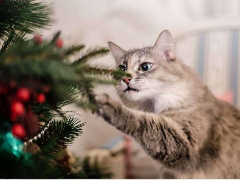 Gefahren Advent Hund Katze Weihnachtsbaum