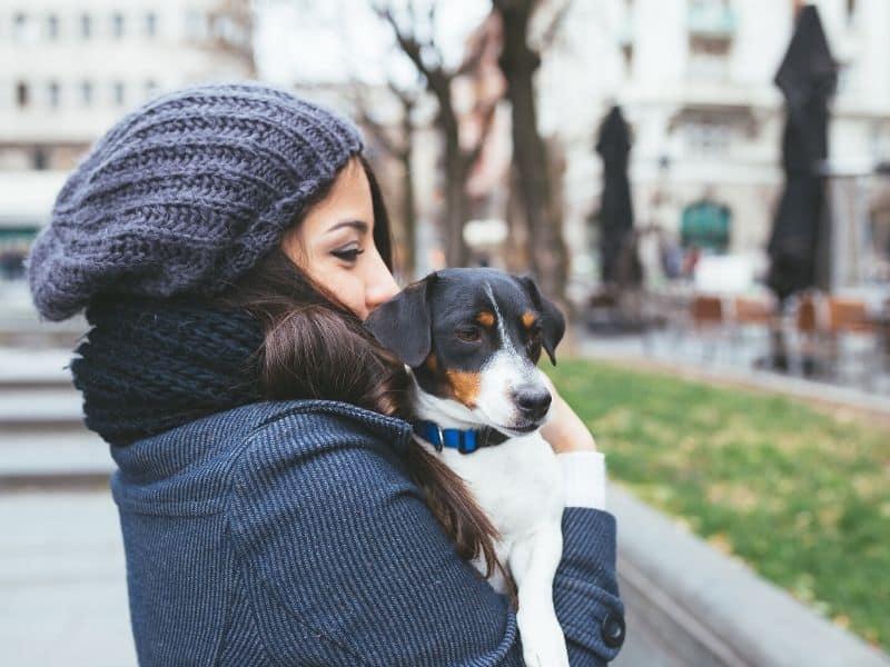 Hunde In Berlin Rechte Pflichten Fur Hundehalter Mit Checkliste