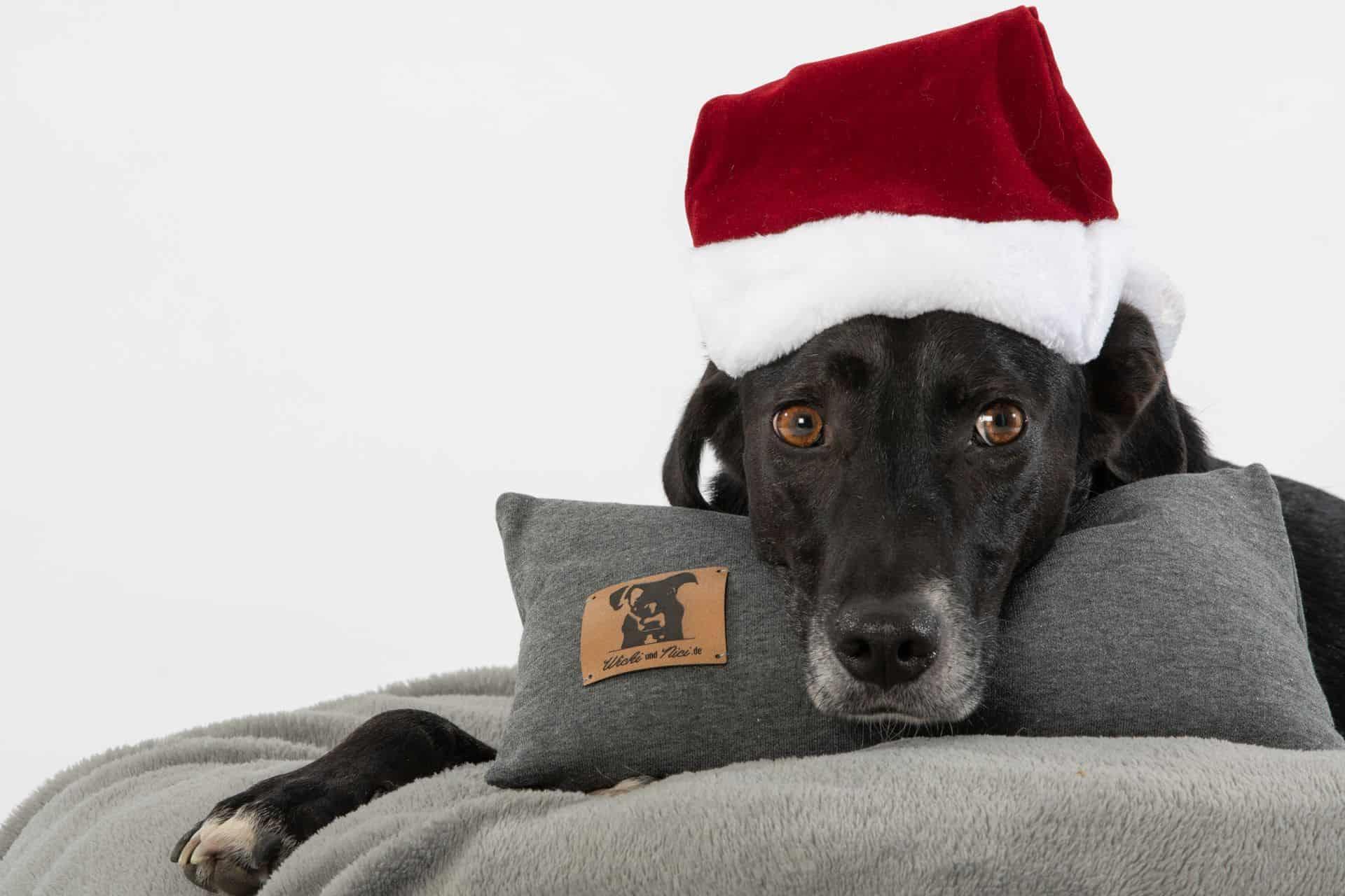 Weihnachtsgeschenke für Hunde Zirbenkissen
