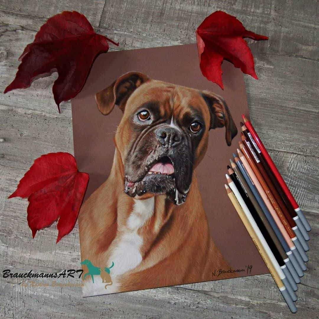 Weihnachtsgeschenke für Hunde brauckmann