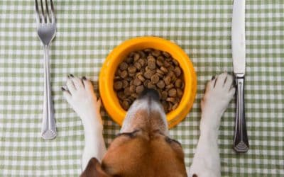 Hundefutter selbst kochen – Das perfekte Festtagsessen