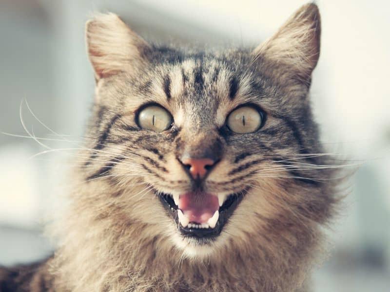 Katzen Spiele Fangspiele Tibeo Tierbetreuung