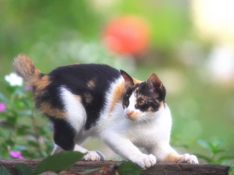 Katzen Spile