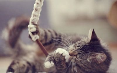 Katzen Spiele – 4 einfache, aber geniale DIY Katzenspiele