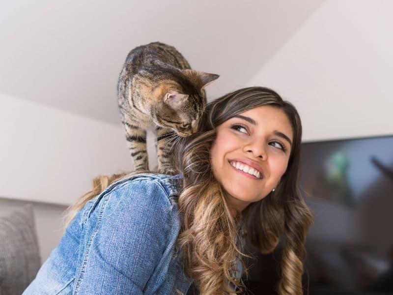 Katzen Spiele Tibeo Tierbetreuung Katzensitter