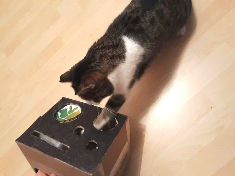Katzen Spiele Tibeo Tierbetreuung Kiste rotated