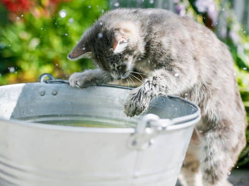 Katzen Spiele Tibeo Tierbetreuung Wasserspiele