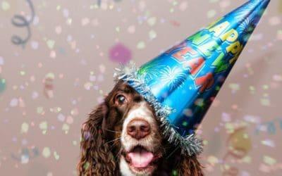 Silvester mit Hund & Katze – Gesund & entspannt ins neue Jahr