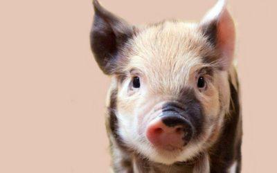 Diese 8 Tiere bringen dir im neuen Jahr Glück