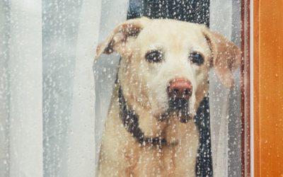 Kann ich meinen Hund alleine lassen oder sollte ich einen Hundesitter holen?