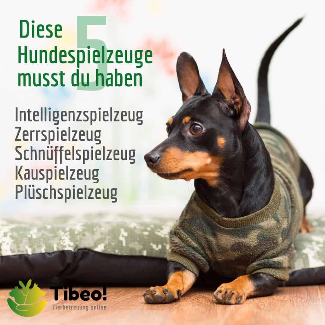 Hundespiele 5 IG