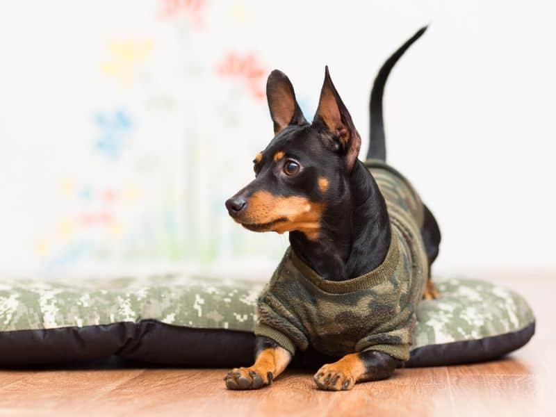Mit diesen 5 Hundespielzeugen wird jede Hundebetreuung zum Hit