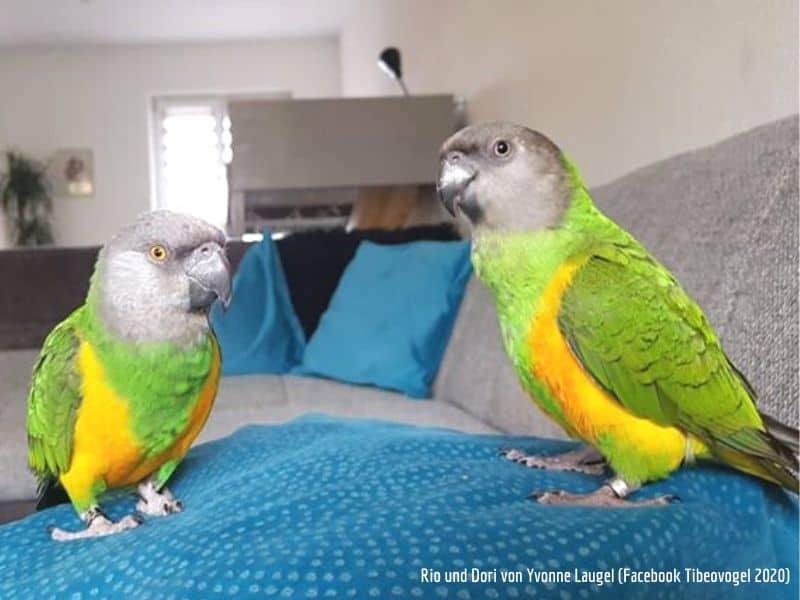 Vogelbetreuung Vogelsitter Tibeo Freunde