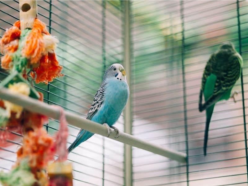Vogelbetreuung – Vogelsitter – Wohin mit den Vögeln im Urlaub?