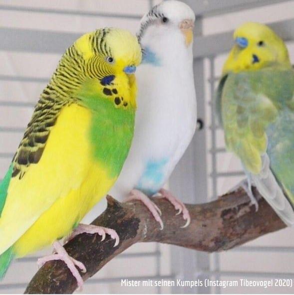 Vogelbetreuung Vogelsitter Tibeo Vogelpension